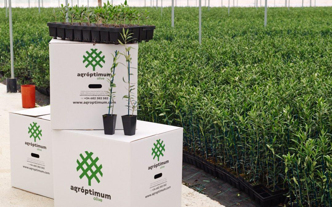 Agróptimum, la empresa jareña que innova en la agricultura