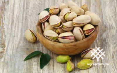 Pistacho Kerman: la variedad hembra más utilizada por la calidad de su fruto