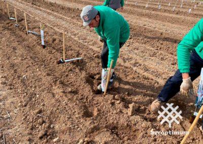 plantación llave en mano