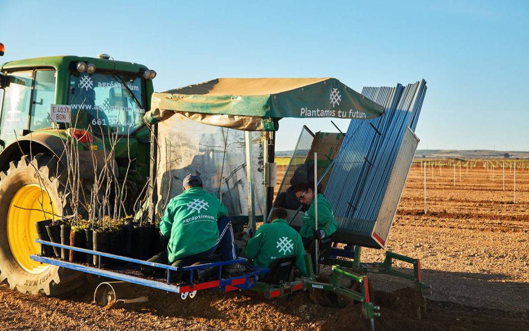 Gestión integral del cultivo de pistacho y otros leñosos