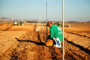 plantacion-gestion-integral