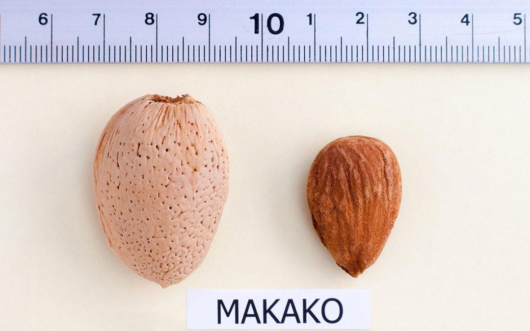 Almendro Makako: la variedad más productiva