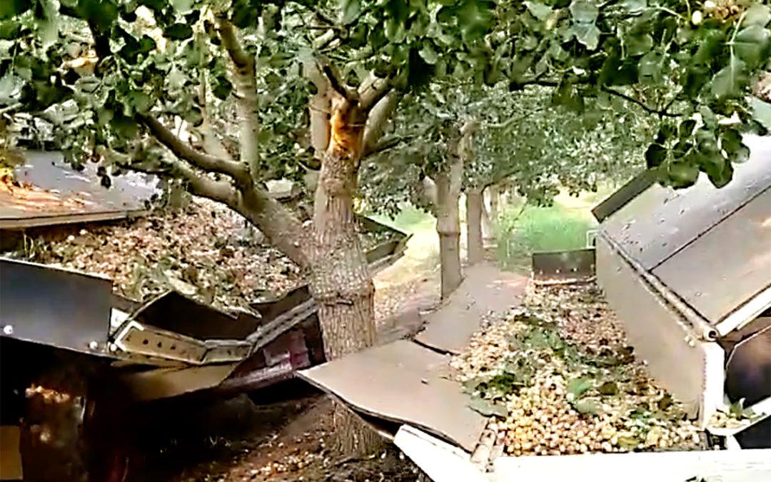 Máquinas de recolección de pistacho
